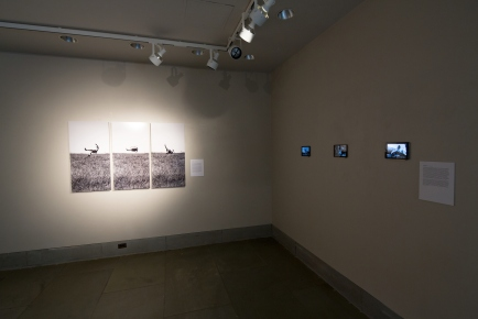Exhibition curated by J. Andrew Salyer